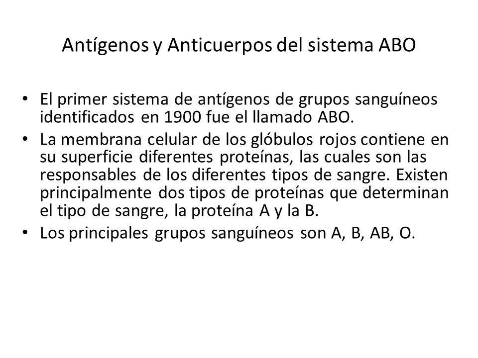 Antígenos y Anticuerpos del sistema ABO El primer sistema de antígenos de grupos sanguíneos identificados en 1900 fue el llamado ABO. La membrana celu