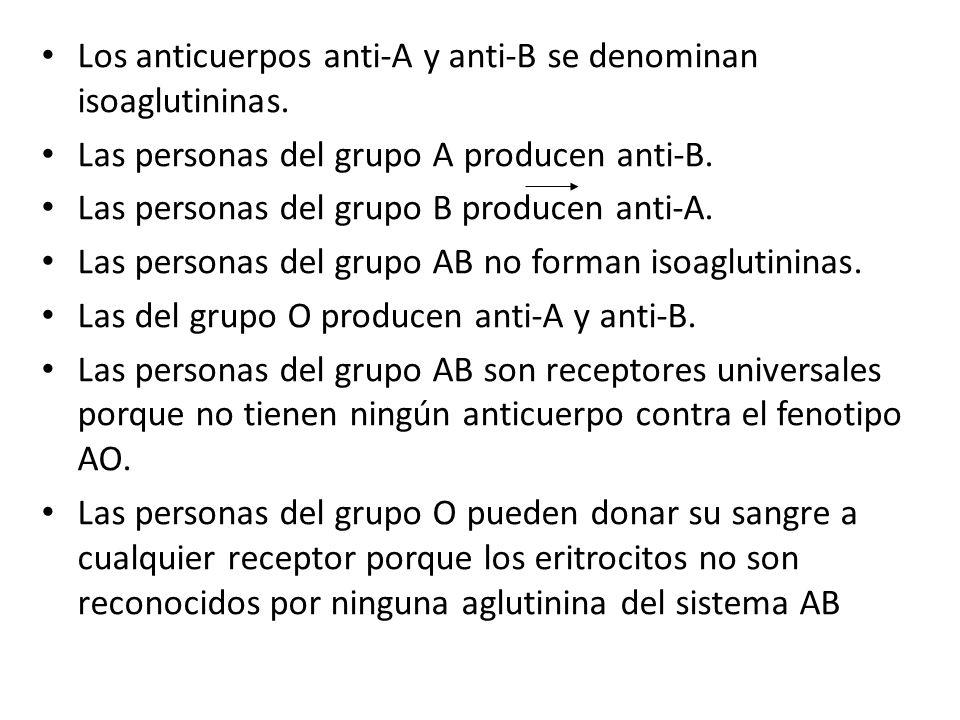 Los anticuerpos anti-A y anti-B se denominan isoaglutininas. Las personas del grupo A producen anti-B. Las personas del grupo B producen anti-A. Las p