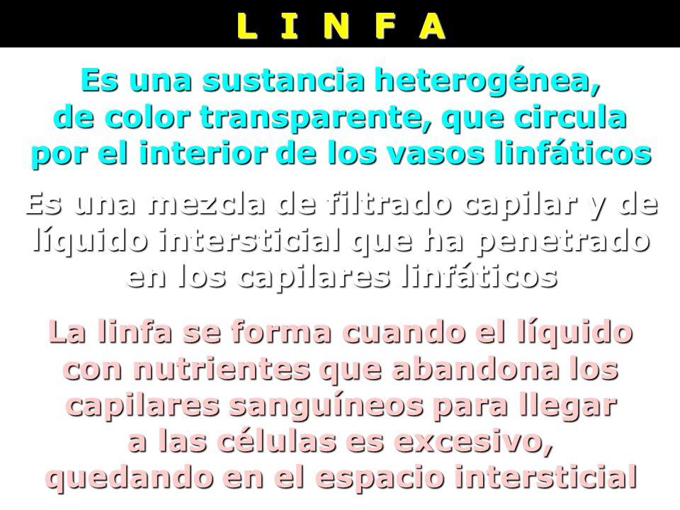 Es una sustancia heterogénea, de color transparente, que circula por el interior de los vasos linfáticos L I N F A Es una mezcla de filtrado capilar y