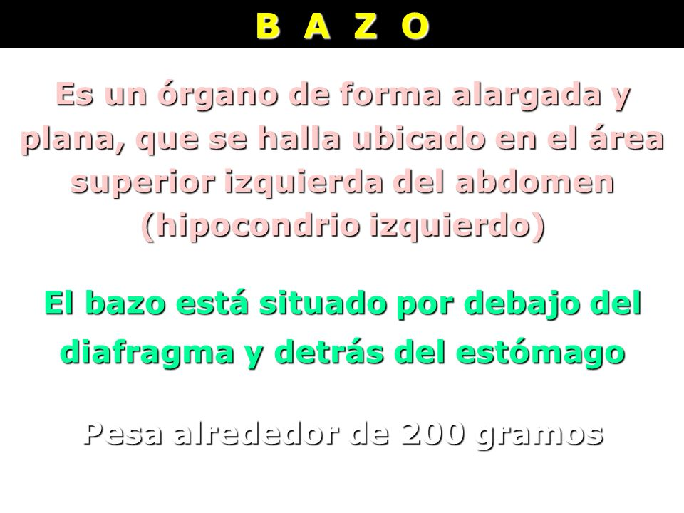B A Z O Es un órgano de forma alargada y plana, que se halla ubicado en el área superior izquierda del abdomen (hipocondrio izquierdo) El bazo está si