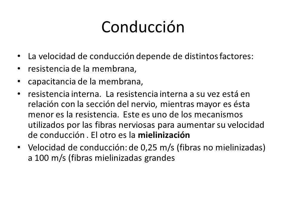 Conducción La velocidad de conducción depende de distintos factores: resistencia de la membrana, capacitancia de la membrana, resistencia interna. La