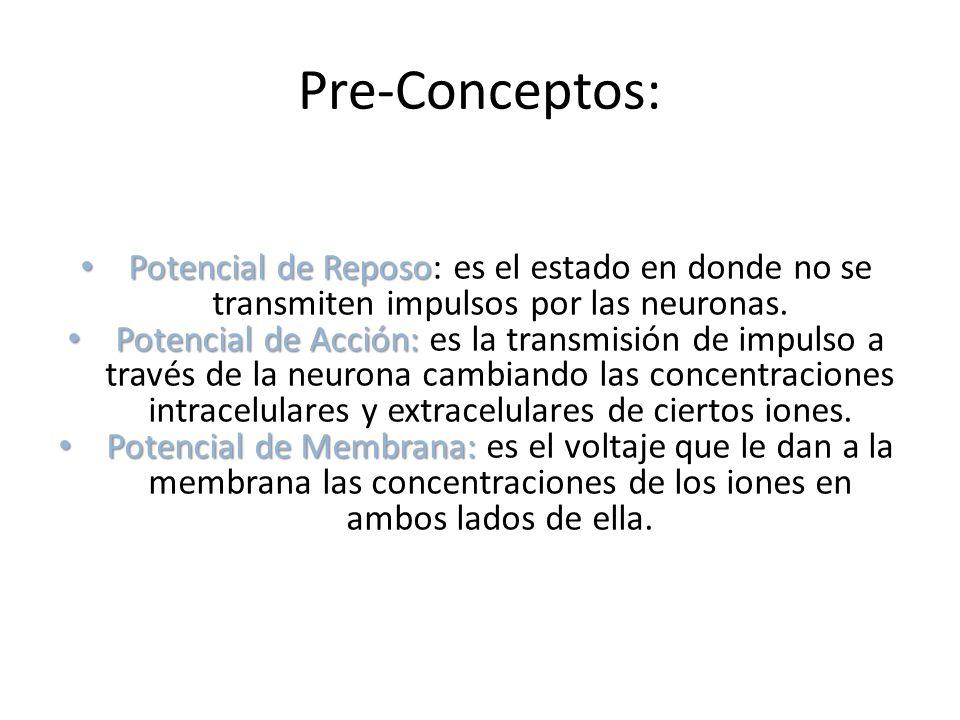 Pre-Conceptos: Potencial de Reposo Potencial de Reposo: es el estado en donde no se transmiten impulsos por las neuronas. Potencial de Acción: Potenci
