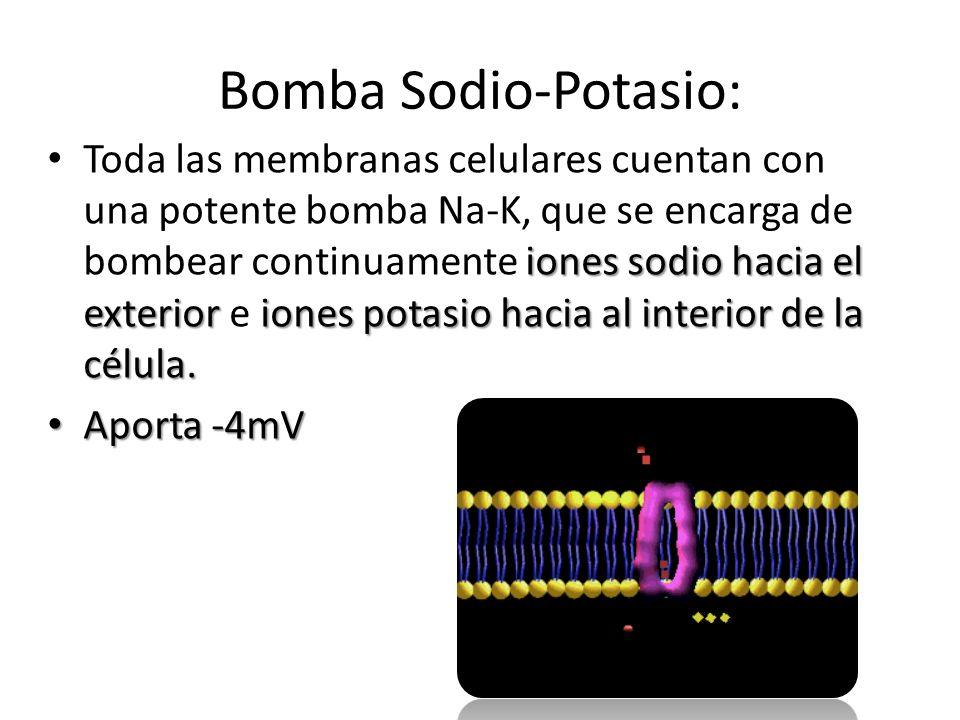 Bomba Sodio-Potasio: iones sodio hacia el exterioriones potasio hacia al interior de la célula. Toda las membranas celulares cuentan con una potente b