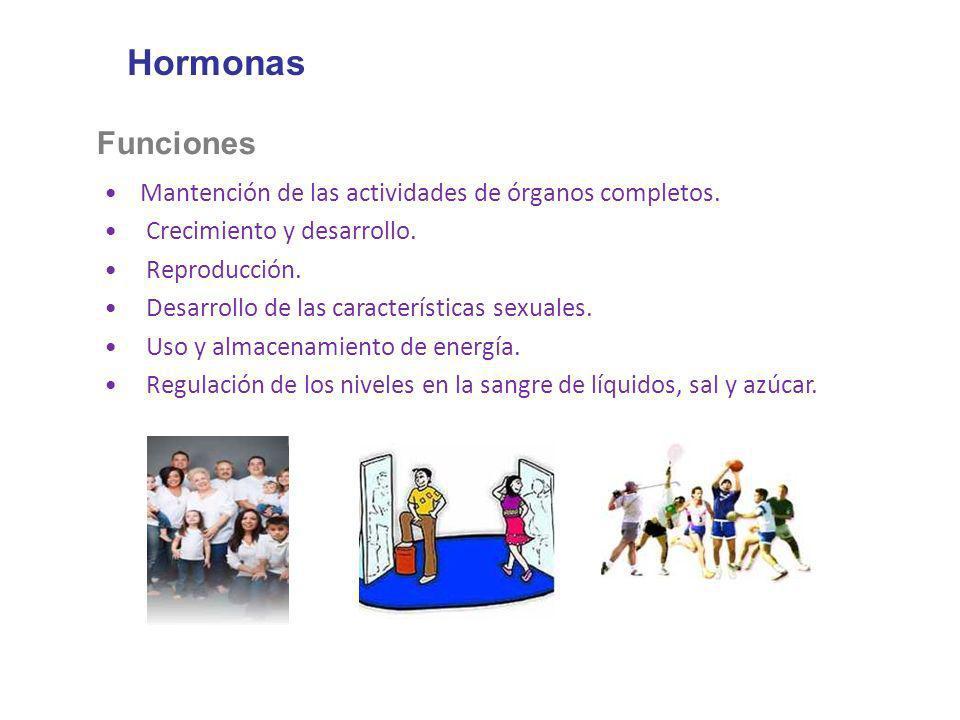 Hormonas Funciones Mantención de las actividades de órganos completos. Crecimiento y desarrollo. Reproducción. Desarrollo de las características sexua