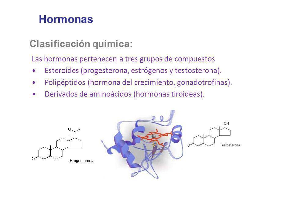 Hormonas Clasificación química: Las hormonas pertenecen a tres grupos de compuestos Esteroides (progesterona, estrógenos y testosterona). Polipéptidos