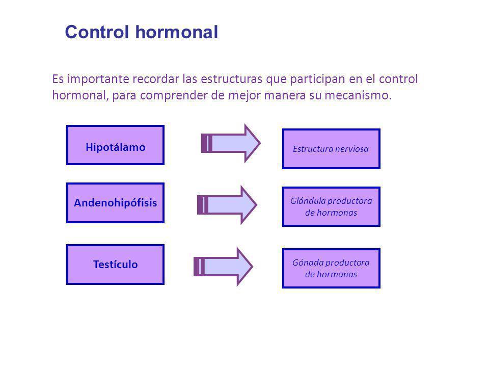 Control hormonal Es importante recordar las estructuras que participan en el control hormonal, para comprender de mejor manera su mecanismo. Hipotálam