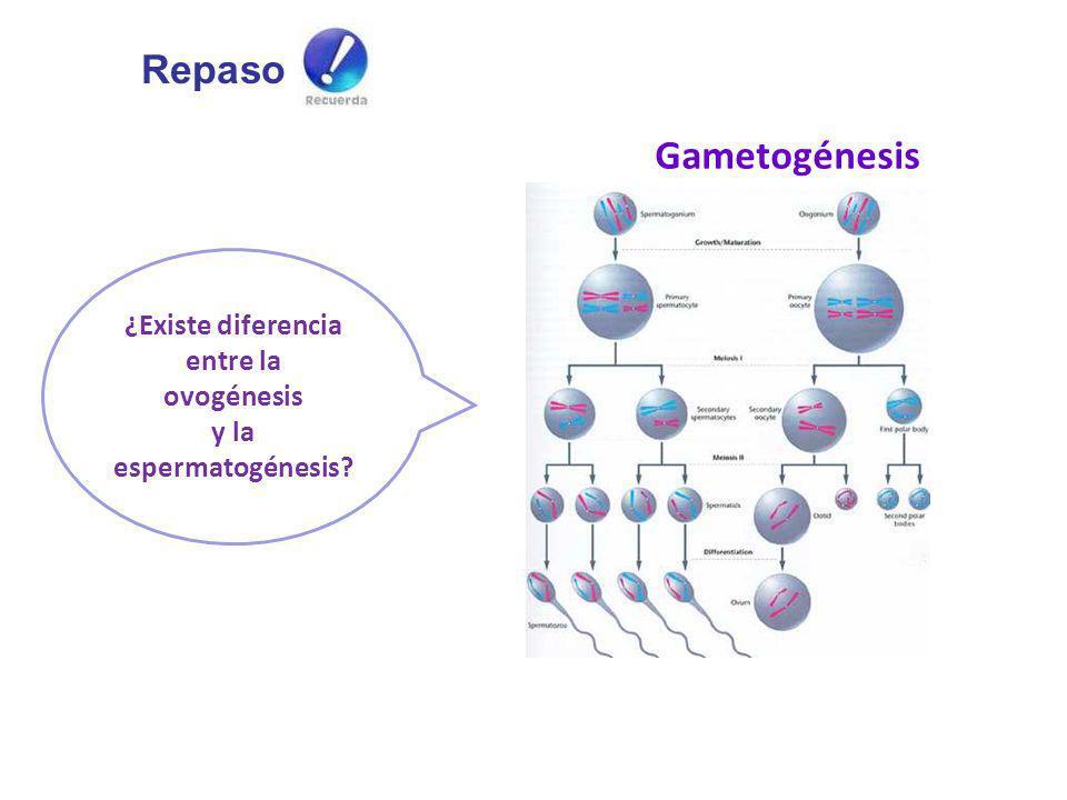 ¿Existe diferencia entre la ovogénesis y la espermatogénesis? Gametogénesis Repaso