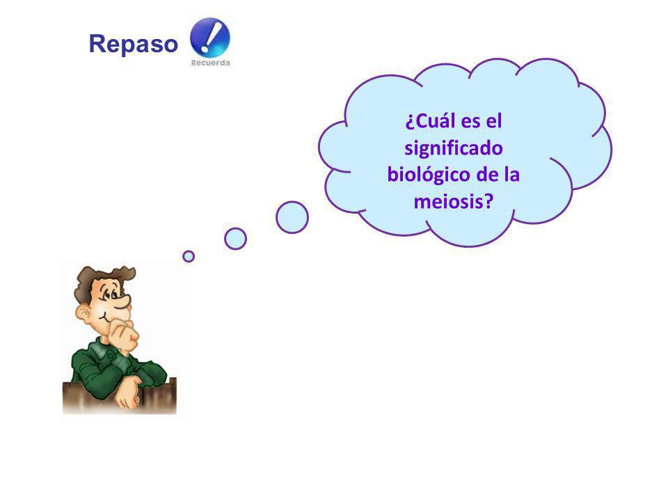 ¿Cuál es el significado biológico de la meiosis? Repaso