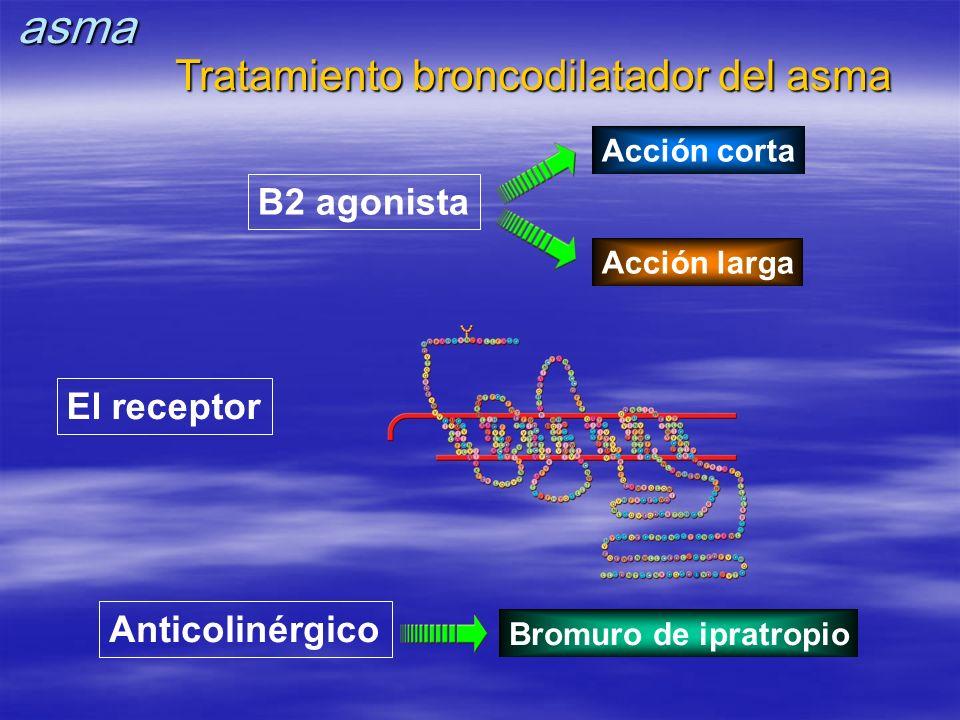 El receptor Anticolinérgico Bromuro de ipratropio B2 agonista Acción corta Acción larga Tratamiento broncodilatador del asma asma