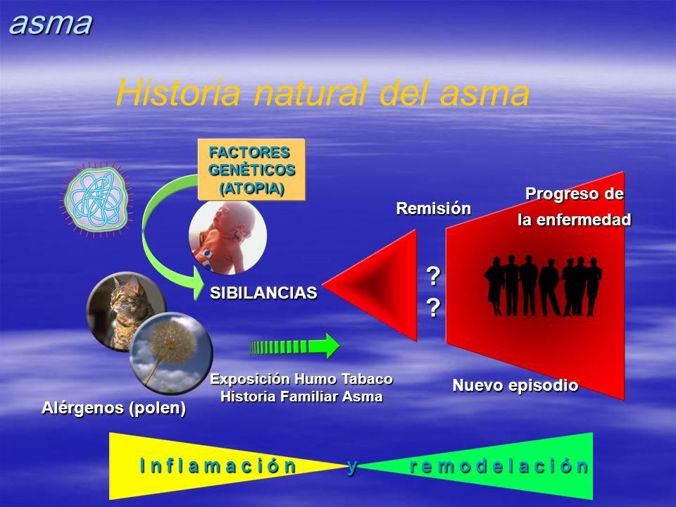 Historia natural del asma I n f l a m a c i ó n y r e m o d e l a c i ó n Remisión?? SIBILANCIAS Alérgenos (polen) Exposición Humo Tabaco Historia Fam