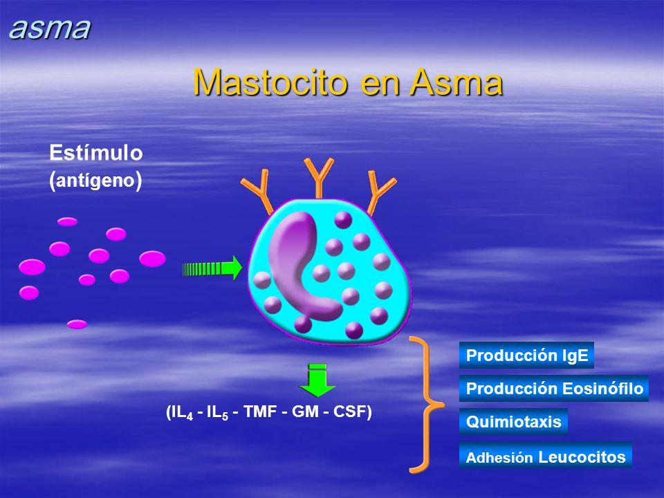 Mastocito en Asma Adhesión Leucocitos (IL 4 - IL 5 - TMF - GM - CSF) Producción IgE Producción Eosinófilo Quimiotaxis Estímulo ( antígeno )asma