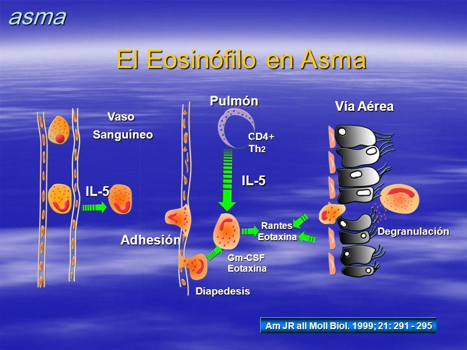 El Eosinófilo en Asma Am JR all Moll Biol. 1999; 21: 291 - 295 IL-5 VasoSanguíneo Adhesión CD4+ Th 2 Diapedesis Gm-CSFEotaxinaPulmónIL-5 RantesEotaxin