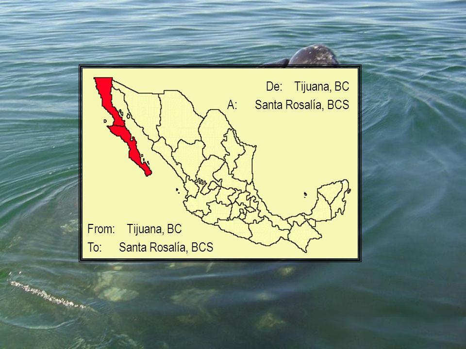 De: Tijuana, BC A: Santa Rosalía, BCS From: Tijuana, BC To: Santa Rosalía, BCS
