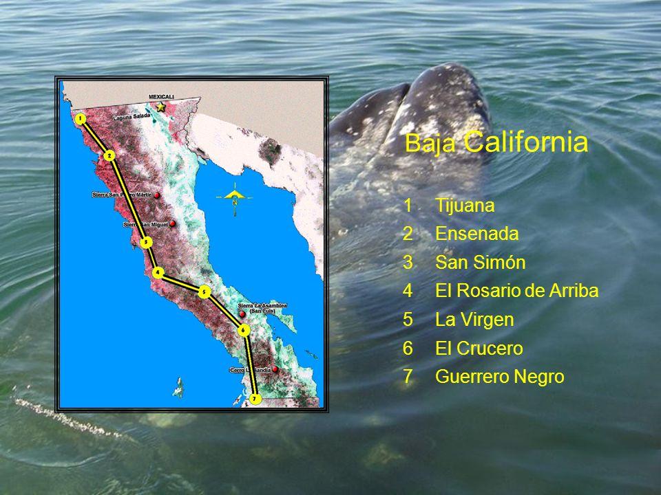 Baja California 1Tijuana 2Ensenada 3San Simón 4El Rosario de Arriba 5La Virgen 6El Crucero 7Guerrero Negro
