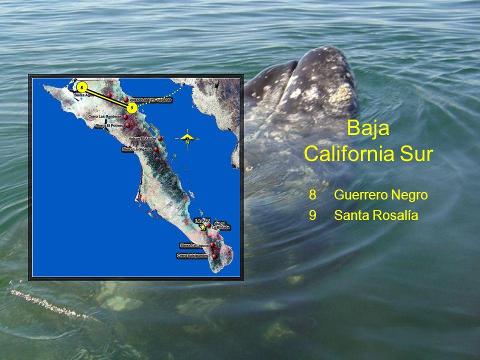 Baja California Sur 8Guerrero Negro 9Santa Rosalía