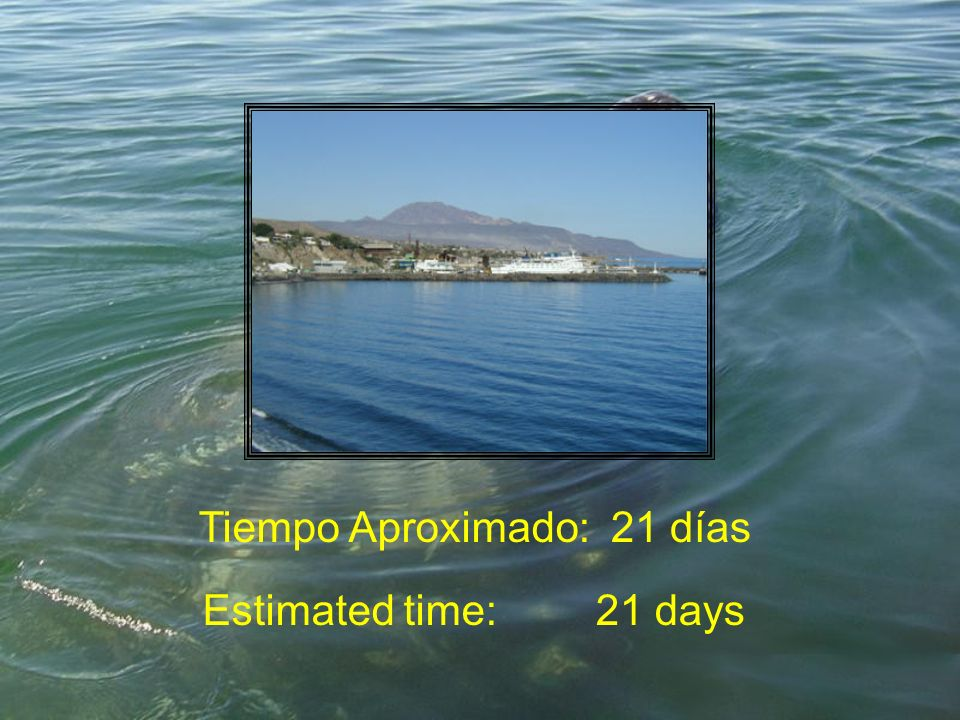 Tiempo Aproximado:21 días Estimated time:21 days
