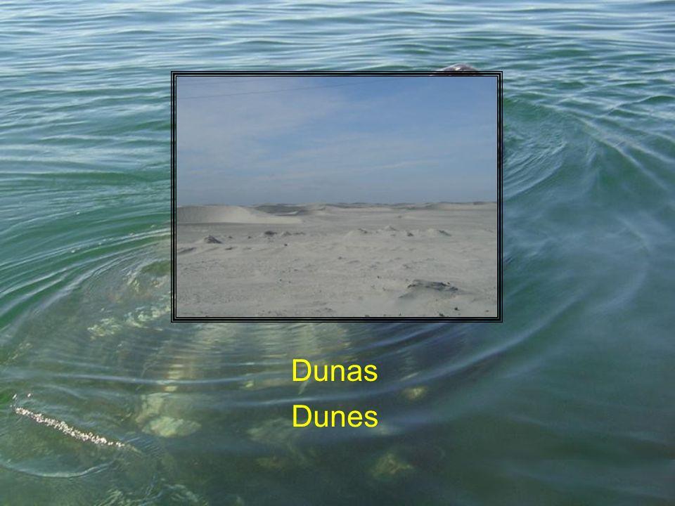 Dunas Dunes