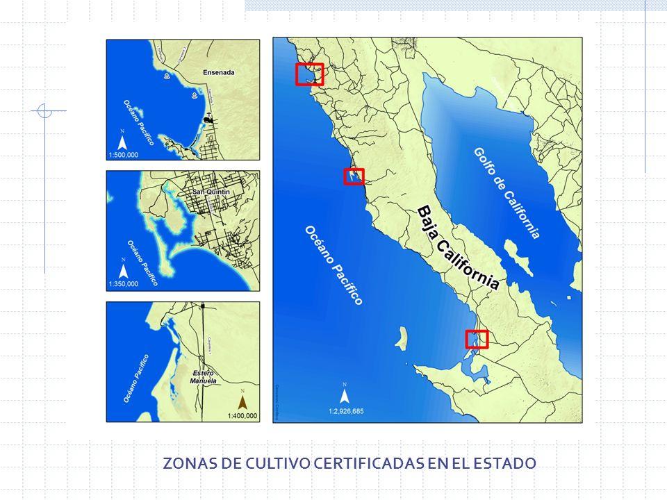 ZONAS DE CULTIVO CERTIFICADAS EN EL ESTADO