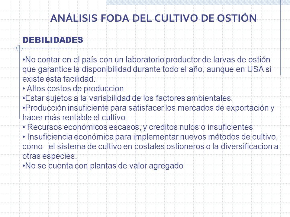 ANÁLISIS FODA DEL CULTIVO DE OSTIÓN DEBILIDADES No contar en el país con un laboratorio productor de larvas de ostión que garantice la disponibilidad