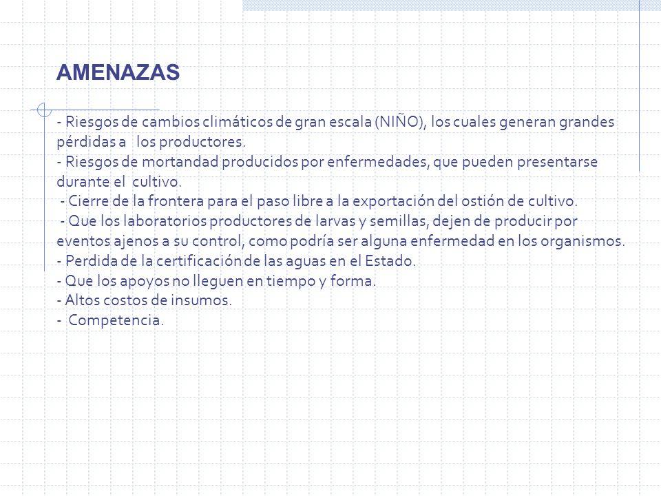 AMENAZAS - Riesgos de cambios climáticos de gran escala (NIÑO), los cuales generan grandes pérdidas a los productores. - Riesgos de mortandad producid