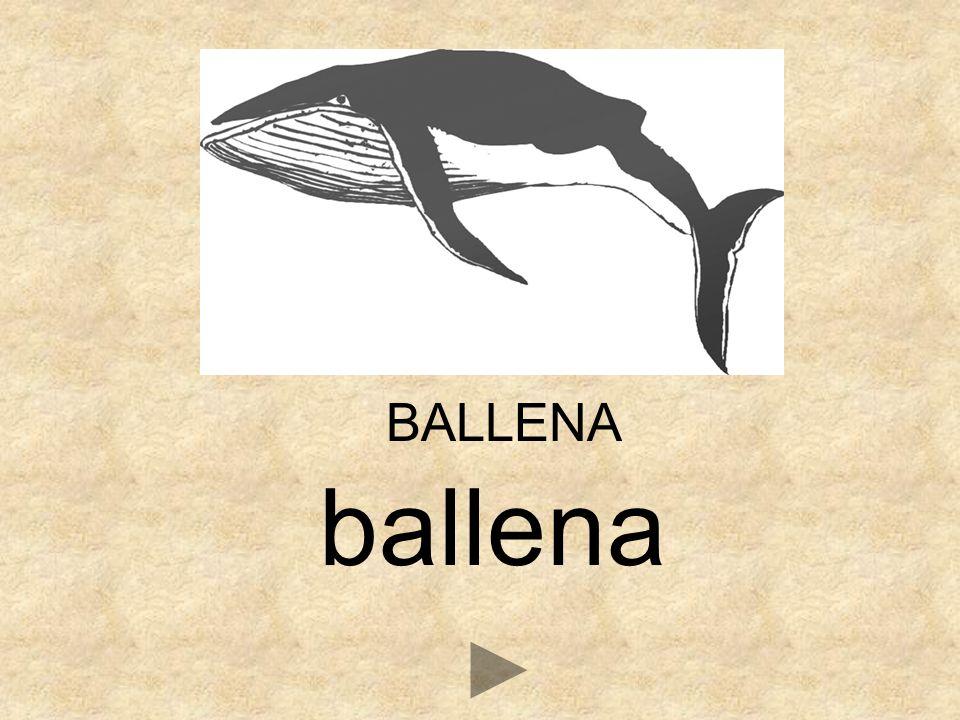 _ALLENA BV