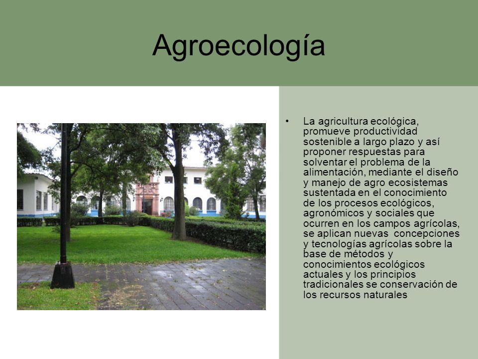 Agroecología La agricultura ecológica, promueve productividad sostenible a largo plazo y así proponer respuestas para solventar el problema de la alim