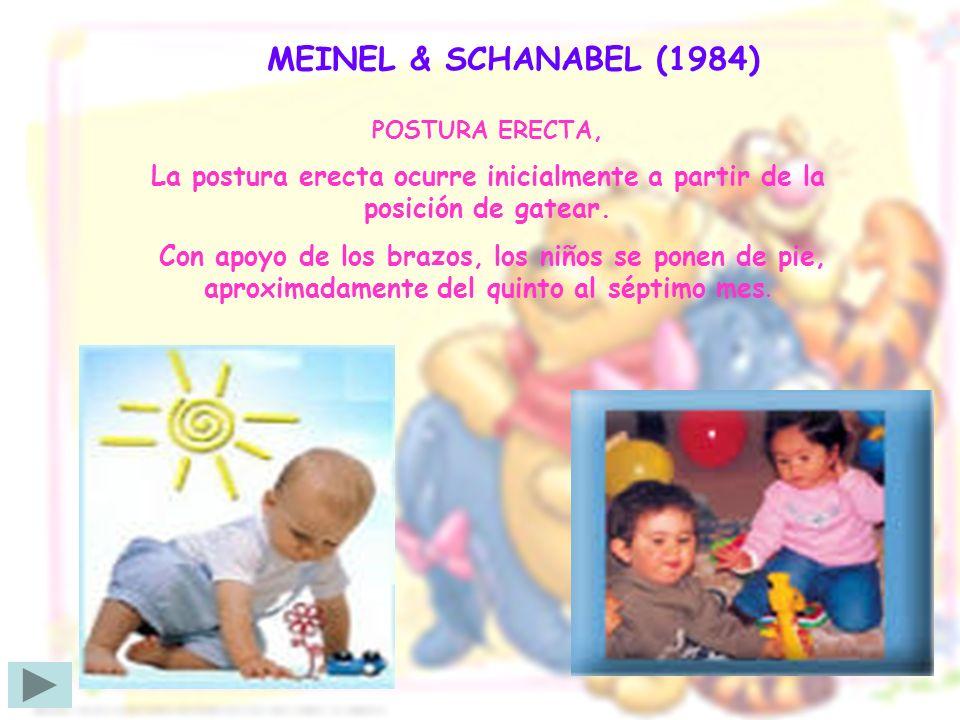 MEINEL & SCHANABEL (1984) POSTURA ERECTA, La postura erecta ocurre inicialmente a partir de la posición de gatear. Con apoyo de los brazos, los niños