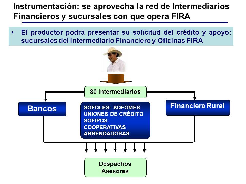 El productor podrá presentar su solicitud del crédito y apoyo: sucursales del Intermediario Financiero y Oficinas FIRA Instrumentación: se aprovecha la red de Intermediarios Financieros y sucursales con que opera FIRA SOFOLES- SOFOMES UNIONES DE CRÉDITO SOFIPOS COOPERATIVAS ARRENDADORAS Bancos Financiera Rural Despachos Asesores 80 Intermediarios
