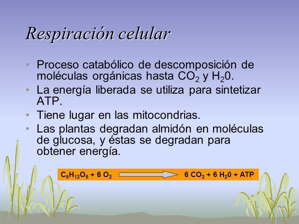 Respiración celular Proceso catabólico de descomposición de moléculas orgánicas hasta CO 2 y H 2 0. La energía liberada se utiliza para sintetizar ATP