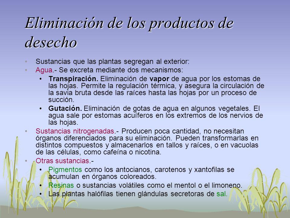 Eliminación de los productos de desecho Sustancias que las plantas segregan al exterior: Agua.- Se excreta mediante dos mecanismos: Transpiración. Eli