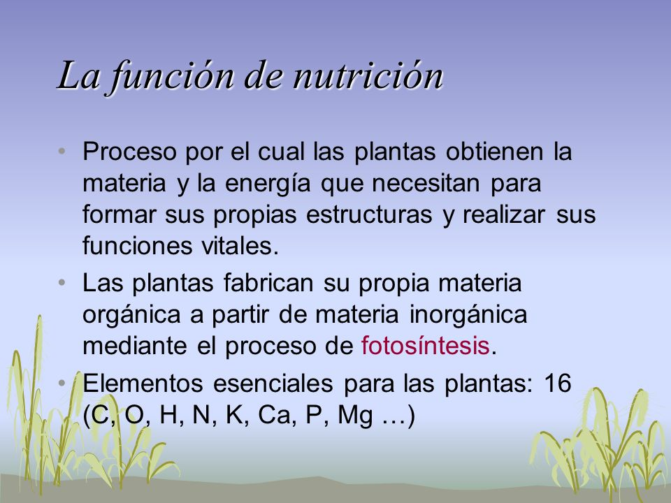 La función de nutrición Proceso por el cual las plantas obtienen la materia y la energía que necesitan para formar sus propias estructuras y realizar