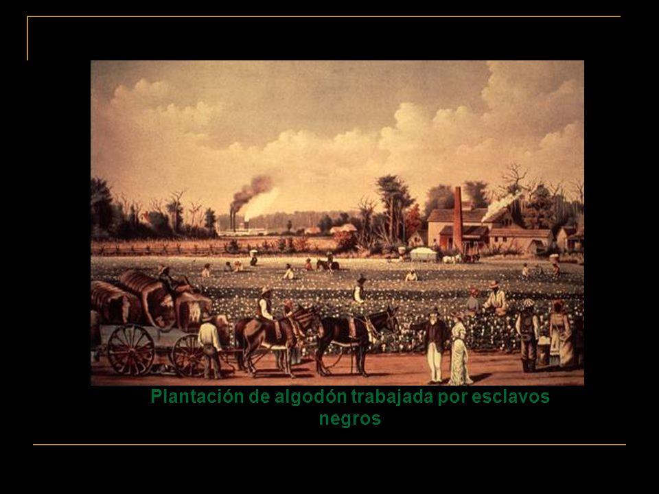 Plantación de algodón trabajada por esclavos negros