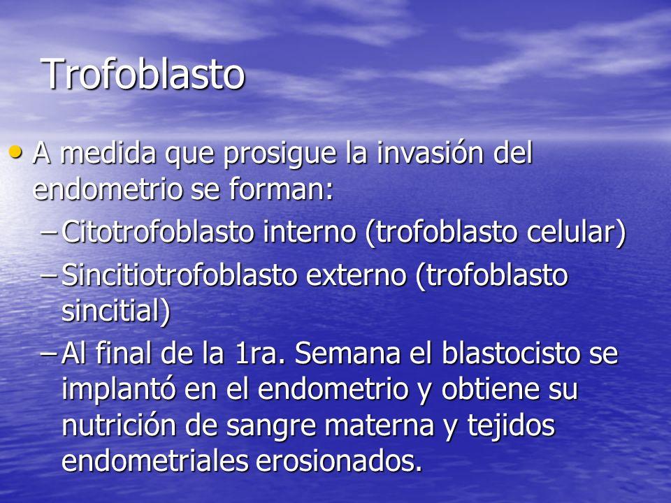 Trofoblasto A medida que prosigue la invasión del endometrio se forman: A medida que prosigue la invasión del endometrio se forman: –Citotrofoblasto i