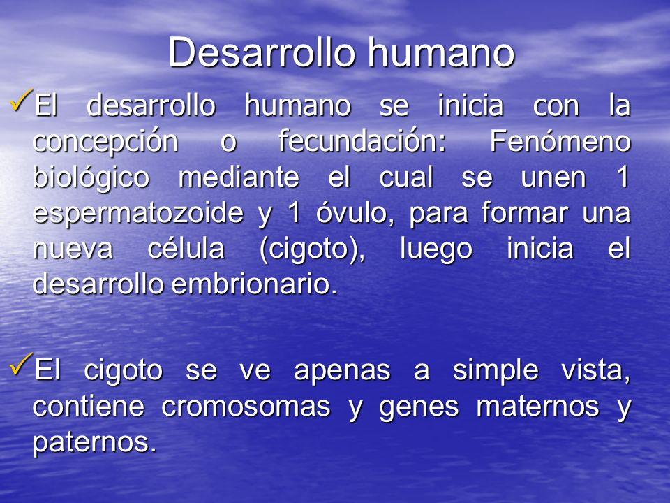 Desarrollo humano El desarrollo humano se inicia con la concepción o fecundación: Fenómeno biológico mediante el cual se unen 1 espermatozoide y 1 óvu