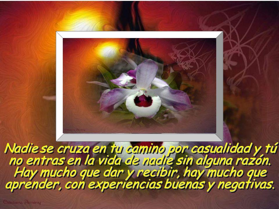 www.vitanoblepowerpoints.net La alegría comienza en el mismo momento en que cesas la búsqueda de tu propia felicidad y procuras la de otros. La alegrí