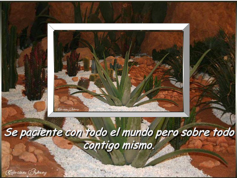 www.vitanoblepowerpoints.net Hay un montón de días bellos que aún vendrán, lo pasado pasó.. pero el mañana durará siempre. Hay un montón de días bello