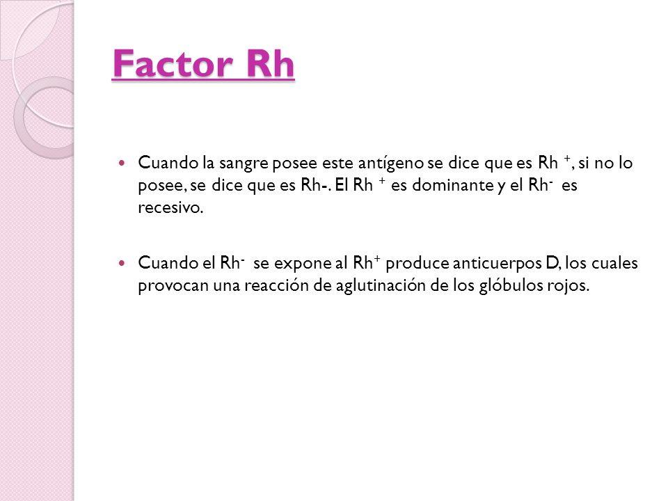 Factor Rh Cuando la sangre posee este antígeno se dice que es Rh +, si no lo posee, se dice que es Rh-. El Rh + es dominante y el Rh - es recesivo. Cu