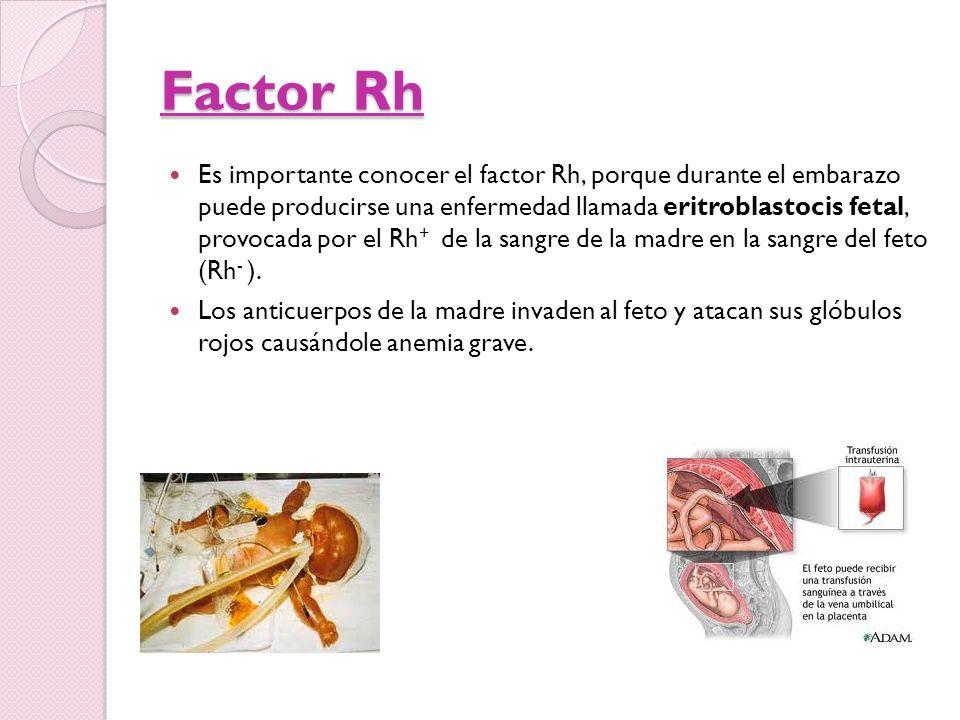 Factor Rh Es importante conocer el factor Rh, porque durante el embarazo puede producirse una enfermedad llamada eritroblastocis fetal, provocada por
