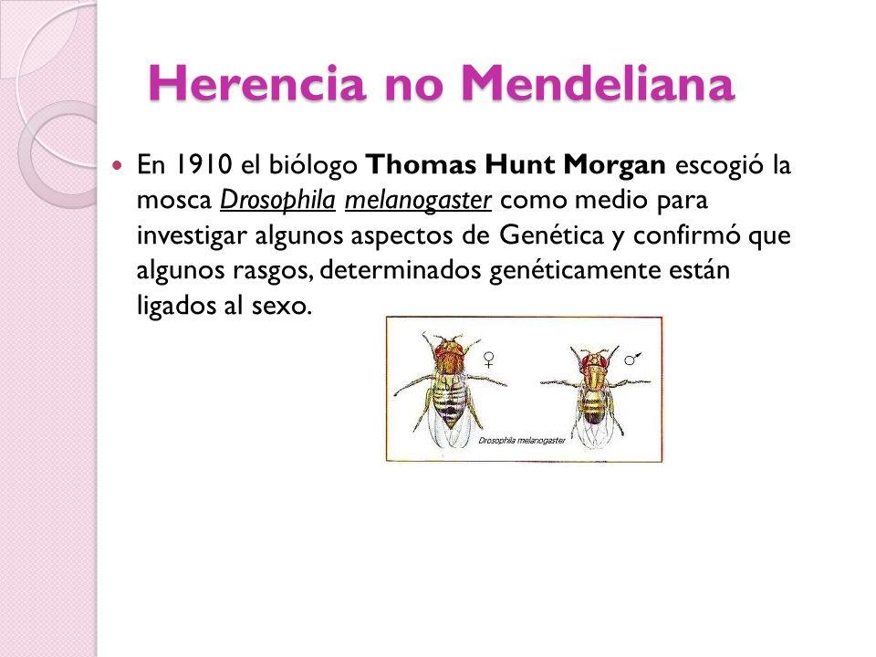 Herencia no Mendeliana En 1910 el biólogo Thomas Hunt Morgan escogió la mosca Drosophila melanogaster como medio para investigar algunos aspectos de G