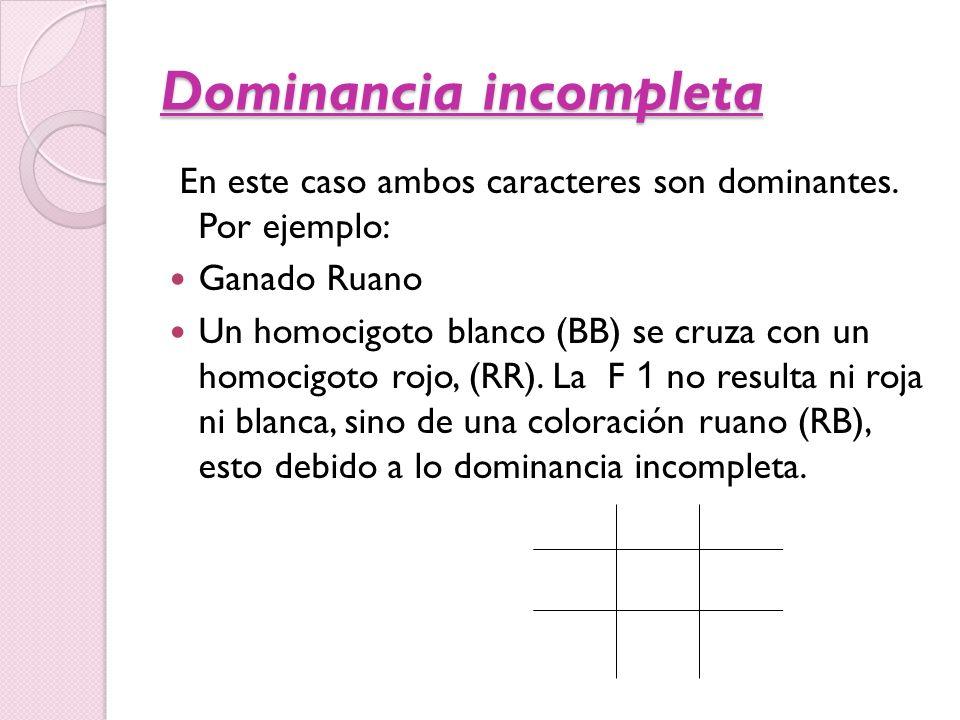Dominancia incompleta En este caso ambos caracteres son dominantes. Por ejemplo: Ganado Ruano Un homocigoto blanco (BB) se cruza con un homocigoto roj