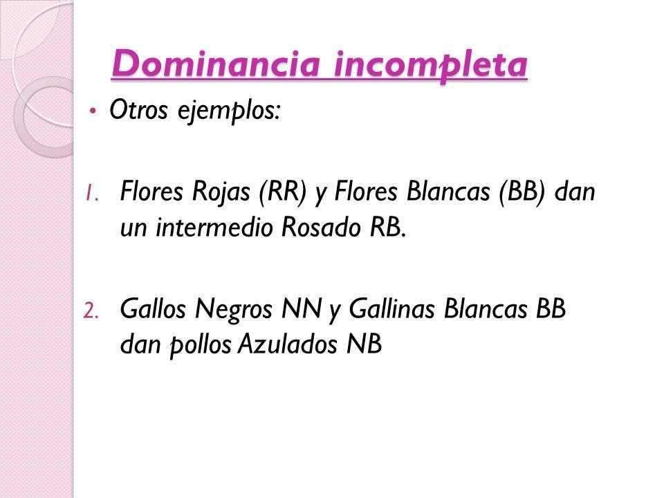 Dominancia incompleta Otros ejemplos: 1. Flores Rojas (RR) y Flores Blancas (BB) dan un intermedio Rosado RB. 2. Gallos Negros NN y Gallinas Blancas B