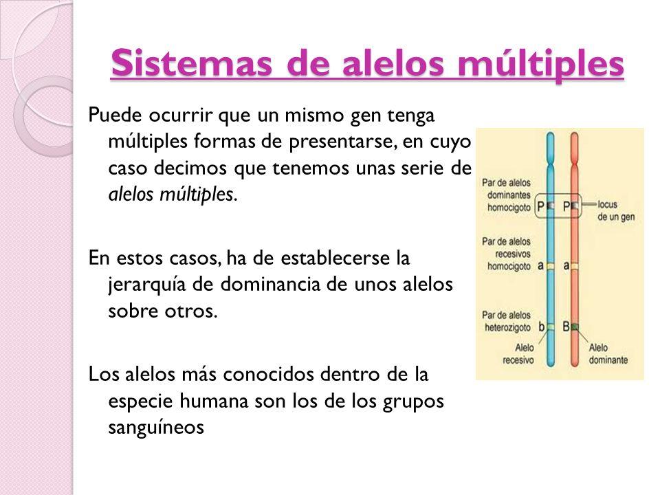 Sistemas de alelos múltiples Puede ocurrir que un mismo gen tenga múltiples formas de presentarse, en cuyo caso decimos que tenemos unas serie de alel