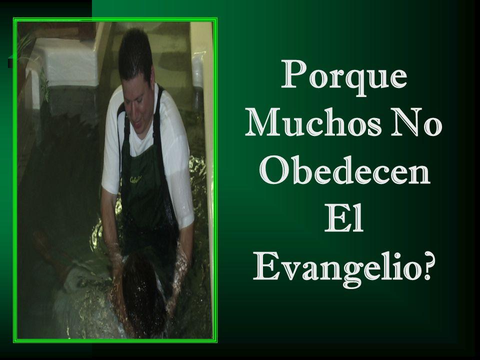 Porque Muchos No Obedecen El Evangelio?