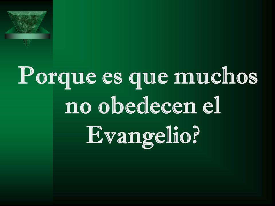 Porque es que muchos no obedecen el Evangelio?
