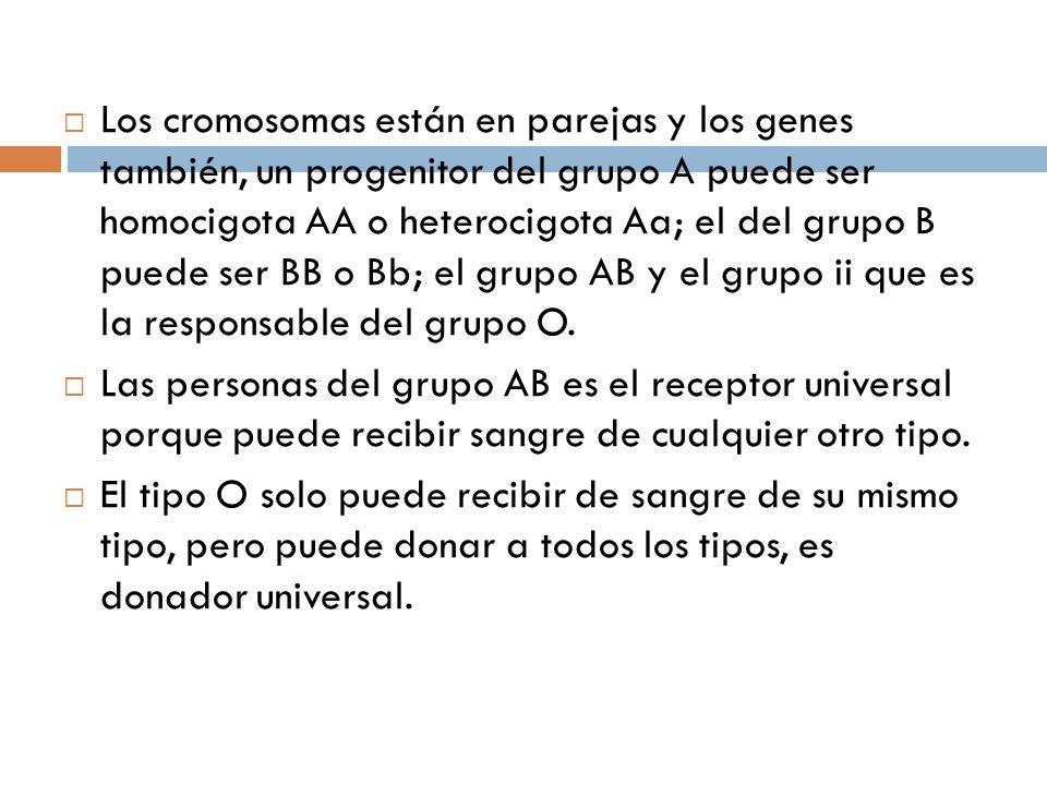 Los cromosomas están en parejas y los genes también, un progenitor del grupo A puede ser homocigota AA o heterocigota Aa; el del grupo B puede ser BB