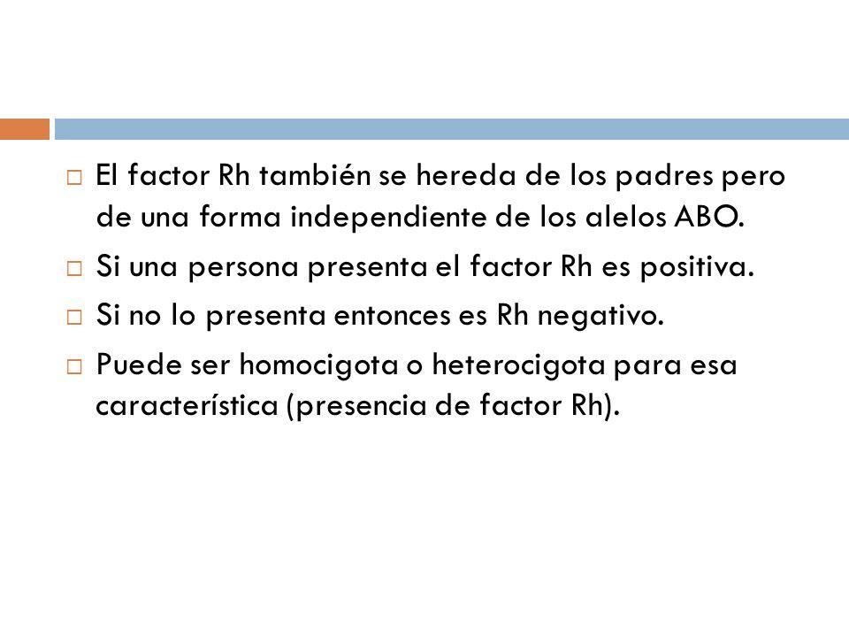El factor Rh también se hereda de los padres pero de una forma independiente de los alelos ABO. Si una persona presenta el factor Rh es positiva. Si n