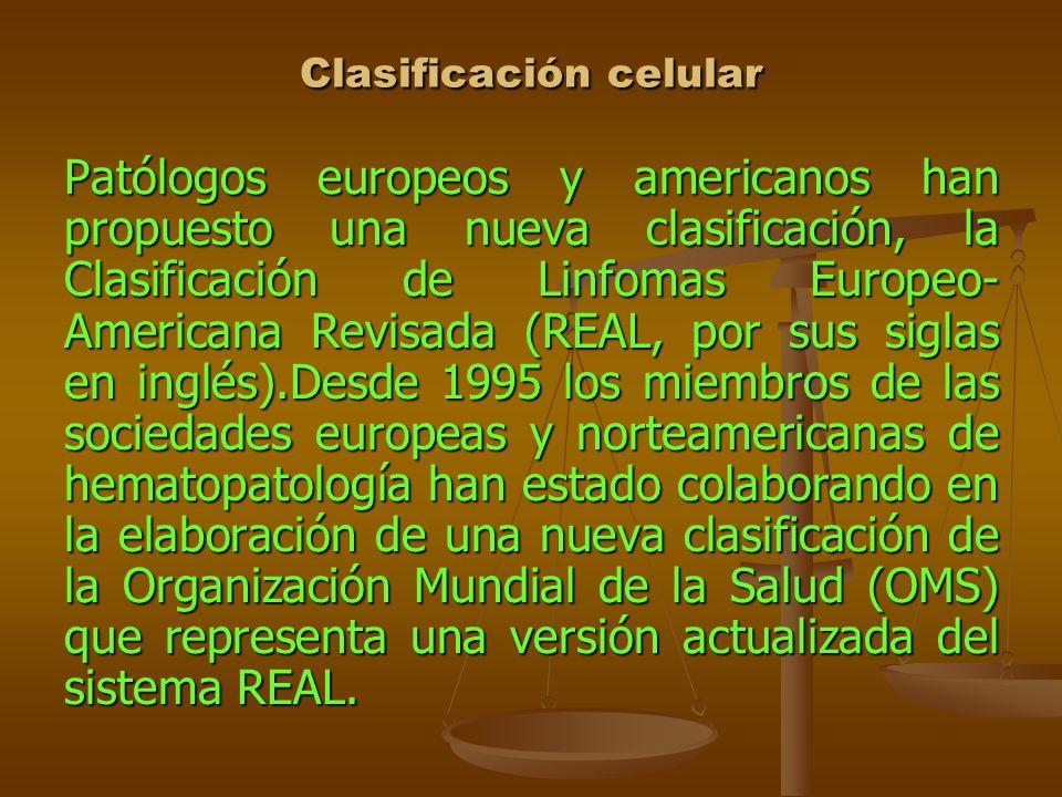 Clasificación celular Patólogos europeos y americanos han propuesto una nueva clasificación, la Clasificación de Linfomas Europeo- Americana Revisada