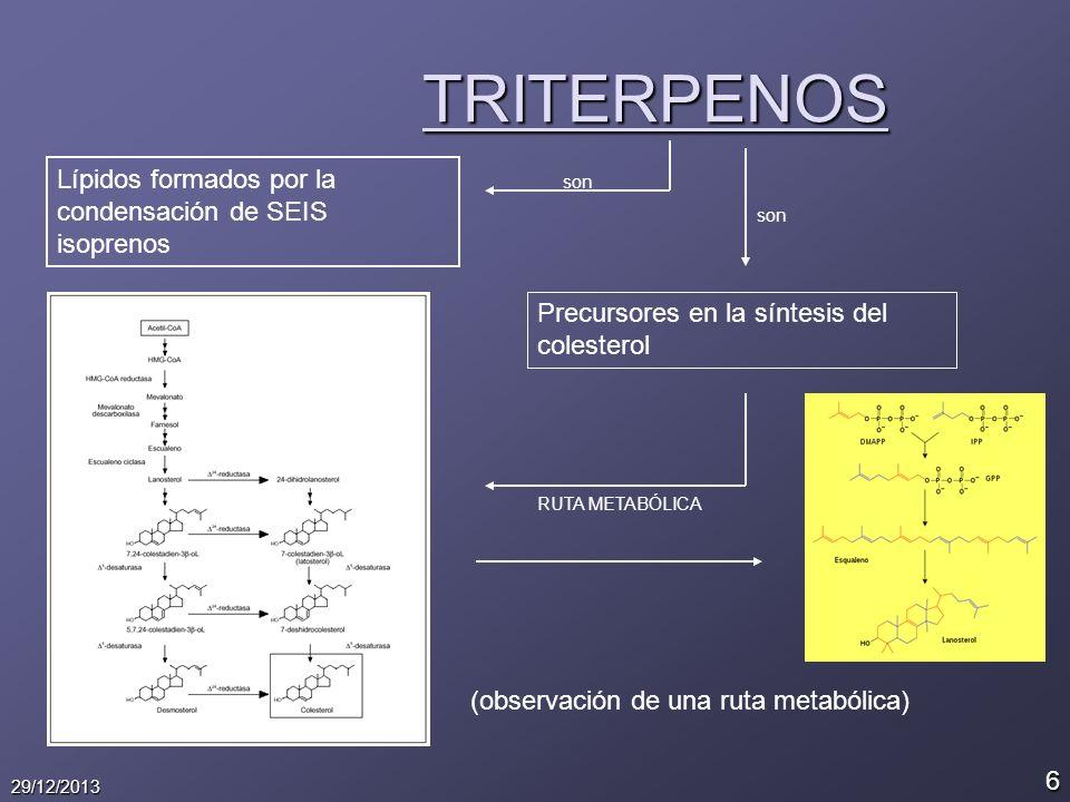6 29/12/2013 TRITERPENOS Lípidos formados por la condensación de SEIS isoprenos son Precursores en la síntesis del colesterol (observación de una ruta