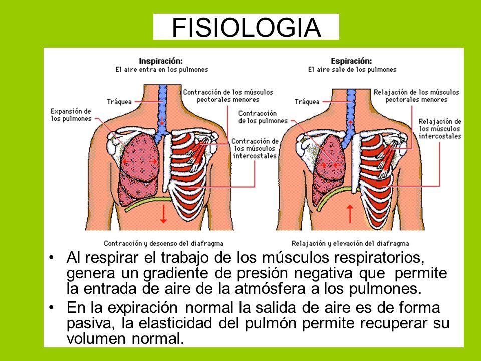 FISIOLOGIA Al respirar el trabajo de los músculos respiratorios, genera un gradiente de presión negativa que permite la entrada de aire de la atmósfer