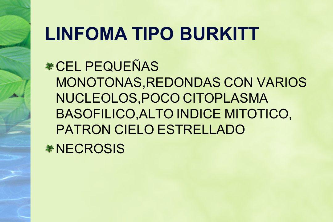 LINFOMA TIPO BURKITT CEL PEQUEÑAS MONOTONAS,REDONDAS CON VARIOS NUCLEOLOS,POCO CITOPLASMA BASOFILICO,ALTO INDICE MITOTICO, PATRON CIELO ESTRELLADO NEC